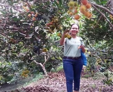 Tour Du Lịch Miền Tây Thăm Quan Chợ Nổi, Vườn Trái Cây.
