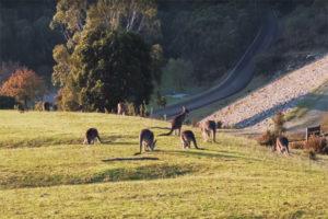 Những Danh Lam Thắng Cảnh Đẹp Úc Mê Hoặc Bất Cứ Ai!