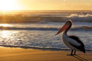 Khí Hậu Đất Nước Úc Có Gì Khác Biệt ?