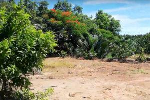 Khu Du Lịch Sinh Thái Vàm Hồ Bến Tre Đầy Hấp Dẫn