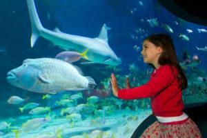 Thăm Quan Viện Hải Dương Sydney, Úc