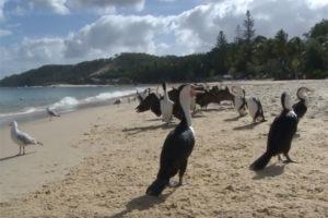 Khám Phá Thiên Đường Những Bãi Biển Queensland – Úc