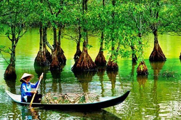 rừng ngập mặn cần giờ 2
