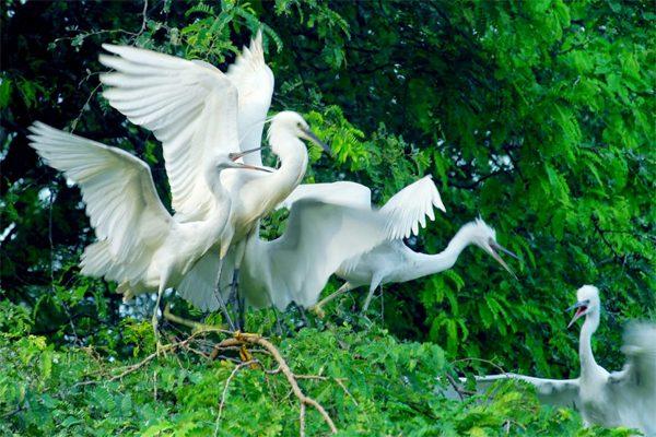 sân chim vàm hồ 1