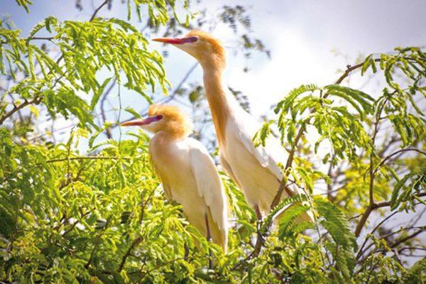 sân chim vàm hồ 2