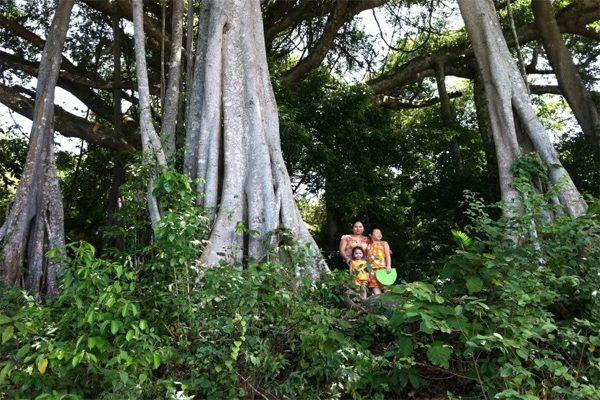cây đa nghìn năm