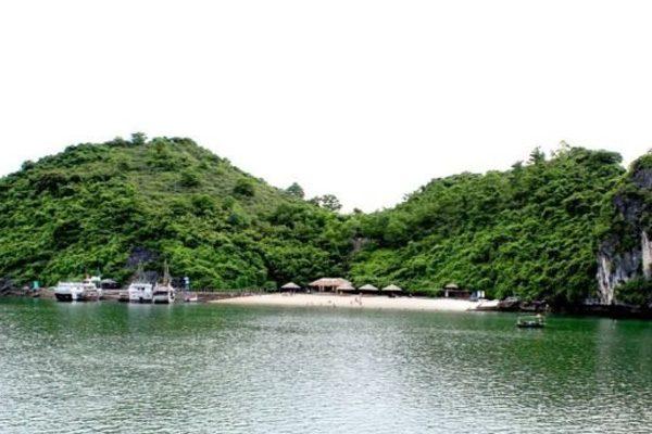 đảo sỏi sim