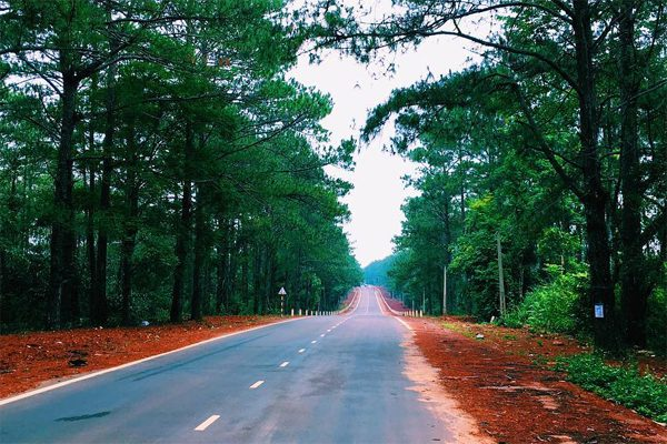 rừng thông măng đen