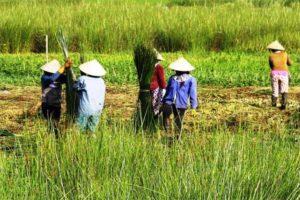 Thăm Quan Làng Nghề Dệt Chiếu Cói Ở Hoài Nhơn, Bình Định