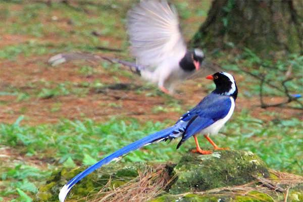 chim vườn quốc gia ba vì