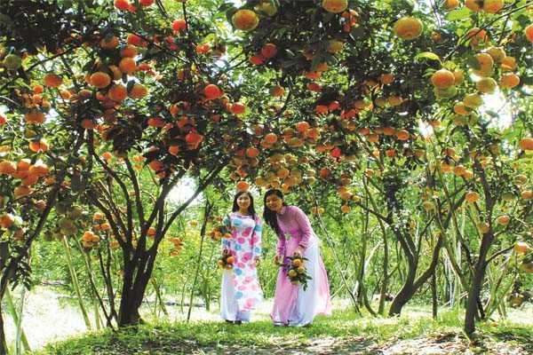 vườn cây ăn quả kỳ sơn
