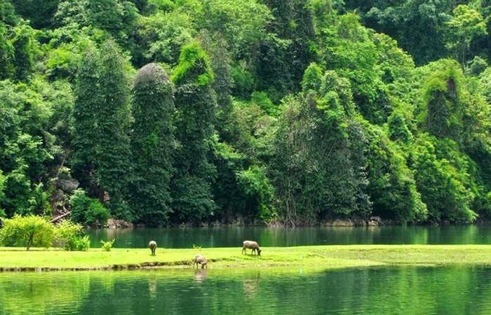 Vườn Quốc Gia Ba Bể - Thăm Quan Khu Du Lịch Vườn Quốc Gia Ba Bể