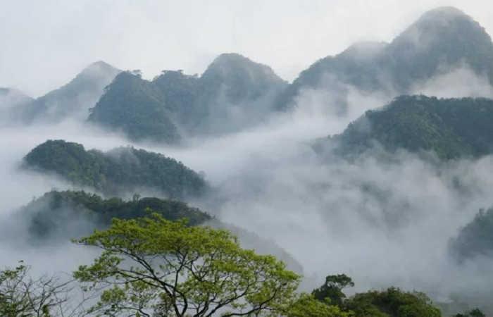đỉnh mây bạc rừng cúc phương