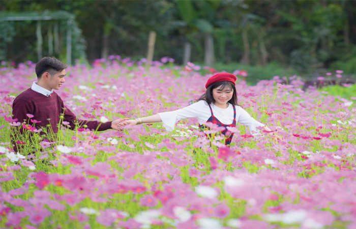 vườn hoa mãn đinh hồng