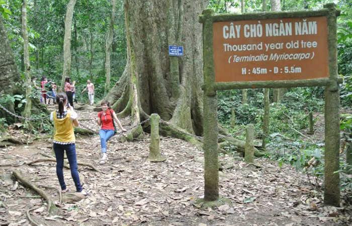 vườn quốc gia cúc phương 1