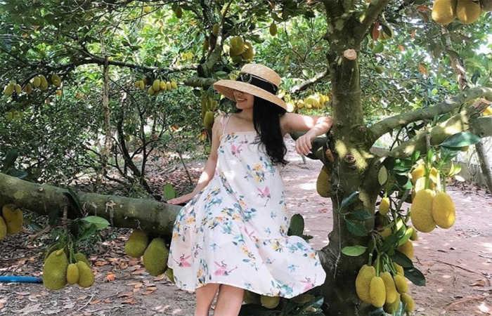 vườn trái cây vĩnh kim 1