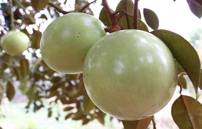 vườn trái cây vĩnh kim