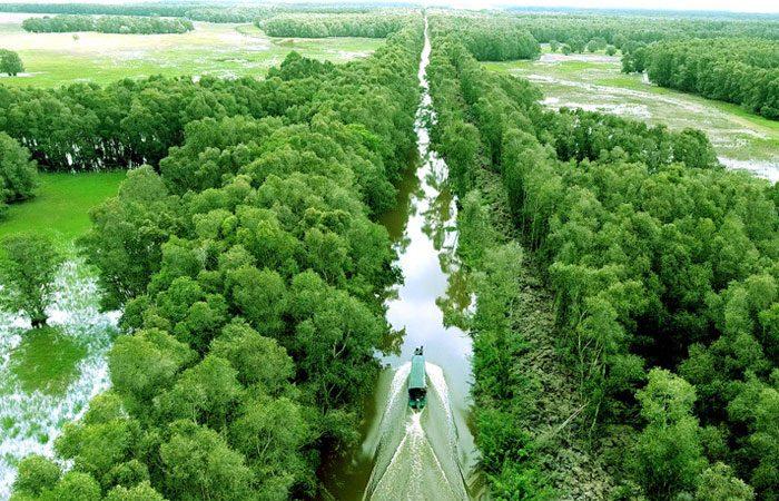 rừng tràm vị thuỷ