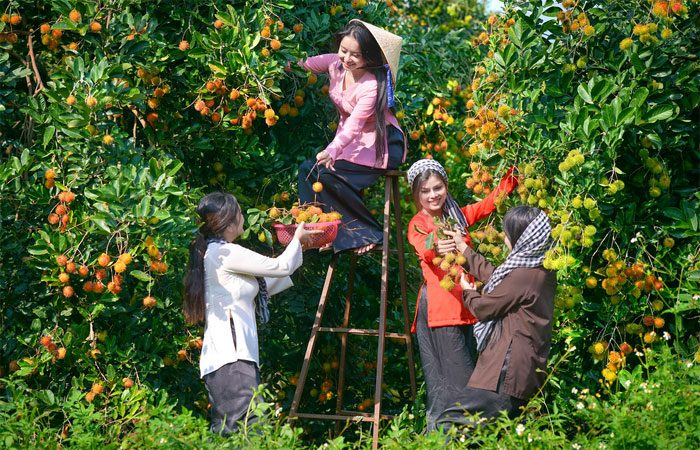 vườn trái cây