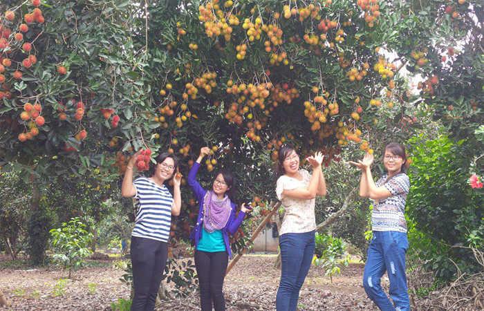 vườn trái cây vinh sang