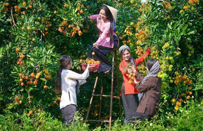 vườn trái cây nhà bé sáu