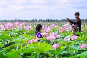 Kinh Nghiệm Du Lịch Sinh Thái Đồng Tháp Mười Mới Nhất